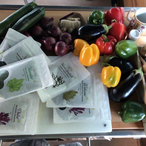 Allrounder-Algen – Alternative Nahrung