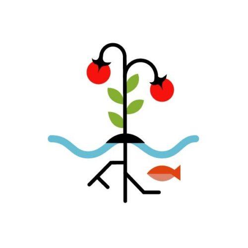 Aquaponic: Tomaten und Fische, wer füttert wen?
