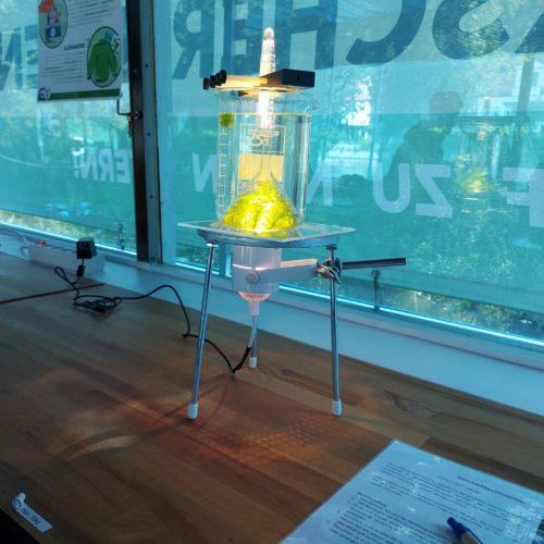 Exkursion zum Thema Photosynthese und Mikroskopie